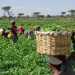 Entrepreneurship: BOA, BOI Woo Niger Delta Ex-Agitators