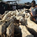 Zamfara orders animal sellers to take pictures with animals