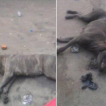 Port Harcourt Residents Mercilessly Kill Dog That Reportedly Transformed From A Man (Photos)
