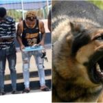 Yahoo Boys Unleash Dog On EFCC Operatives In Ibadan