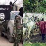 Boko Haram/Herdsmen: Ethnic nationalities regroup to defend territories