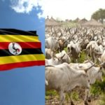 Uganda Set To Issue Birth Certificates To Cows