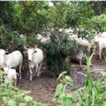 Herders' attacks: Farmers in Oyo, Osun, others demand N284bn compensation