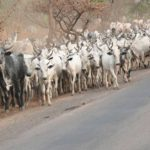 Don't bring cows to South-East on foot again, governors tell herders