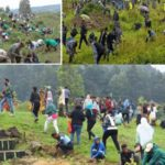 Ethiopians `break' world record for trees planted in one day (see photos)