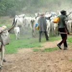 Herdsmen Convert Ondo Government Forest Reserve Into Militia Camp