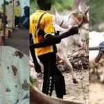Herdsmen attack: I'm still in trauma, says Ondo Monarch