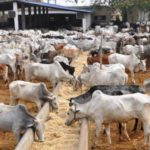 Cattle settlements: Southeast urges Fed Govt to pilot scheme  in North