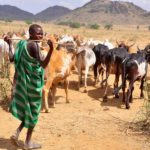Northern Groups Tell Fulani Herdsmen To Relocate From South, Gives Reason