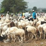 Eid-El-Kabir: Livestock, Foodstuff Sellers Cry Out Over Low Patronage In Kaduna