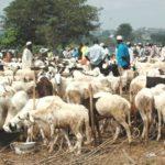 Eid-El-Kabir: Livestock, Foodstuff Sellers Cry Out Over Low Patronage In Kaduna