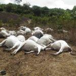 EXTRA: Thunder kills 36 cows on Ondo 'sacred mountain' (photos