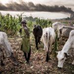RUGA: Kano commences action, names forest, market for herdsmen settlement