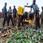 Hisbah destroys 196,400 bottles of beer in Kano