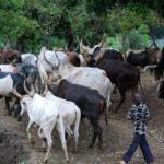 Ondo community chases away 200 Fulani herdsmen