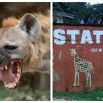 Panic Over Escape Of Hyena From Imo Zoo