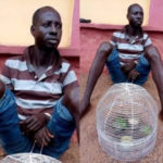 Man Stabs Brother To Death For Bringing Parrots Into Their Home In Ogun (PHOTOS)