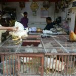 India poultry industry hit by false virus claims
