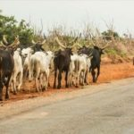 Benue arrests 400 herdsmen, seizes 600 cows