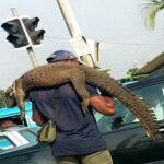PHOTOS: Man hawks Crocodile in Port Harcourt traffic