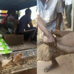 Man tortured to death over missing goat in Benue (photos)