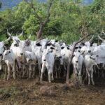 With Police Backing, Fleeing Fulani Herdsmen Return To Ogun Community