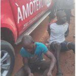 Amotekun Arrests 37 Herdsmen, 5,000 Cattle For Violating Quit Notice In Ondo