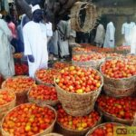 Blockage: Northern Tomato Farmers, Traders Lose Over N10Billion in One Week, Cry Out for Help