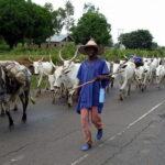 Youths Repel Fulani Herdsmen From Entering Kwara Community