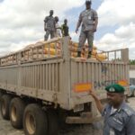 Dangote truck arrested with 600 bags of smuggled rice in Ogun (photos)