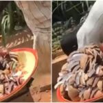 VIDEO & PHOTOS: Coconut Seller Caught Using Gutter Water To Wash His Coconut