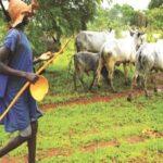 Igangan Killer Herdsmen Again Kill 3 Hunters In Ogun