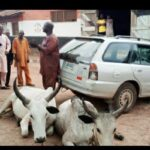 52-year-old man arrested for alleged cow theft in Kwara