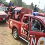 Anti-grazing Law: Amotekun Arrests 400 Cows In Ondo